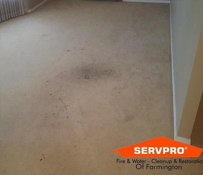 Residential Carpet Cleaning  Before