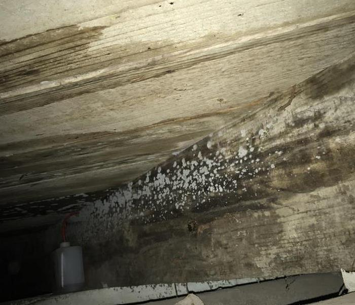 Residential Mold Remediation- Desloge, MO